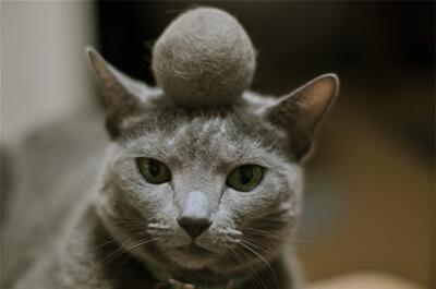 毛玉を頭に乗せる猫