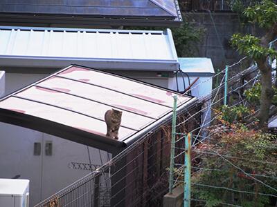 民家の屋根を歩く猫
