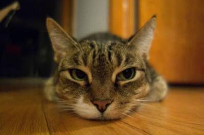 気怠そうにする猫