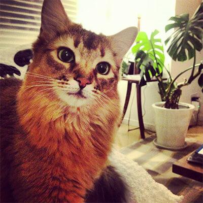 水原希子の飼い猫チッチョ