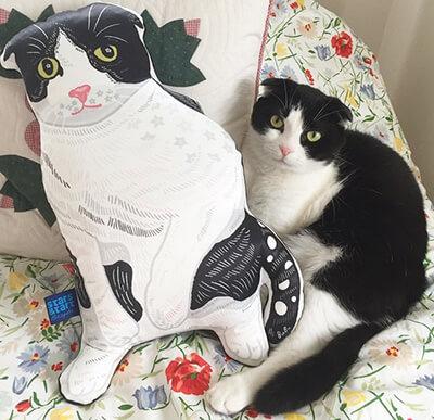 水原希子の飼い猫ブブ