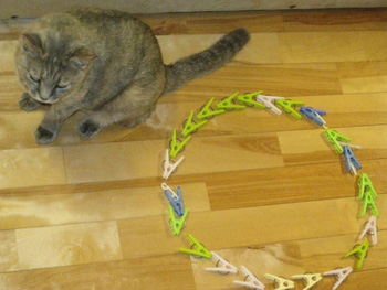 洗濯バサミの猫転送装置