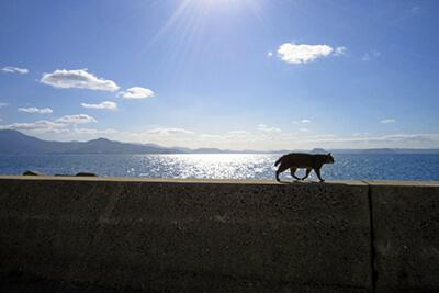 海辺を歩く猫