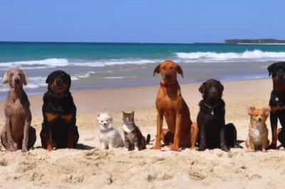 犬の中に並ぶ猫