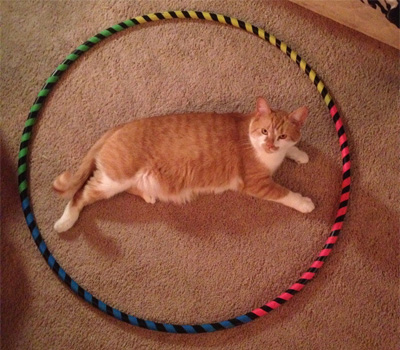 猫ホイホイに入る猫