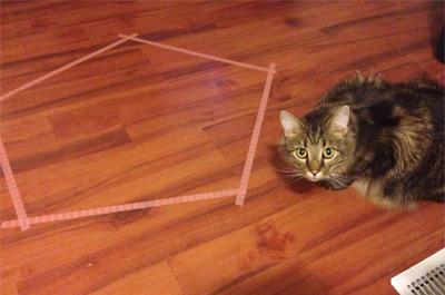 猫ホイホイよりカメラが気になる猫