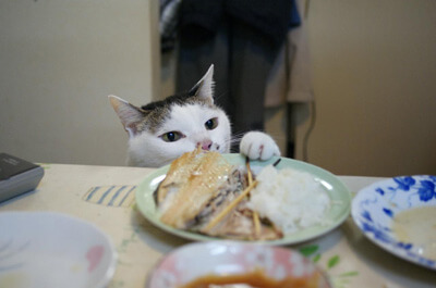 盗み食いをしようとする猫