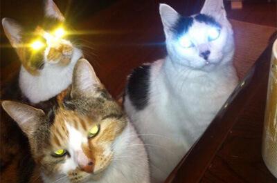 目が黄色に光る猫