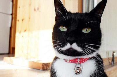 紳士に見える猫