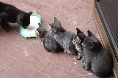行儀よくご飯を待つ子猫