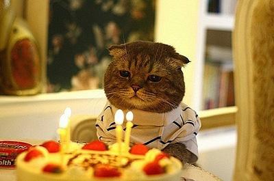 誕生日ケーキを見つめる猫