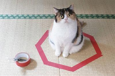 赤いテープの猫ホイホイ