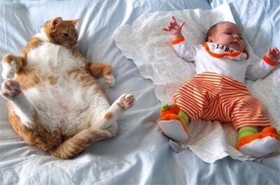 赤ちゃんと並んで寝る猫
