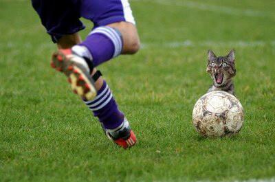 蹴られそうになっている猫