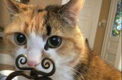 金具がひげに見える猫
