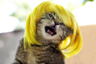 金髪のかつらを被った猫