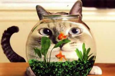 金魚を狙う猫