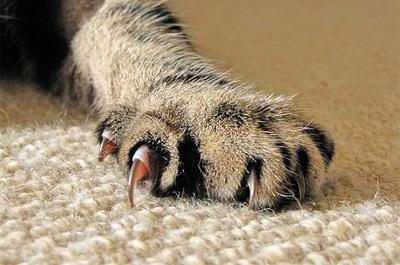 鋭い爪の猫