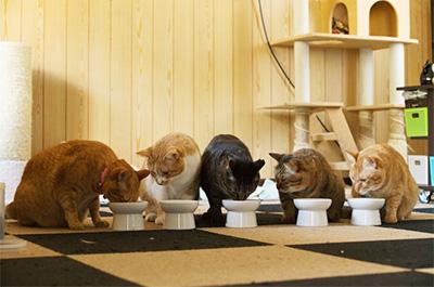 隣の食事が気になる猫たち