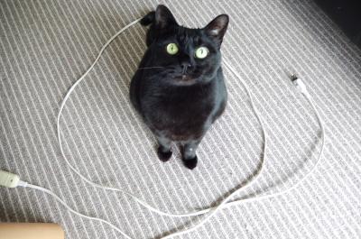 電気コードの猫転送装置