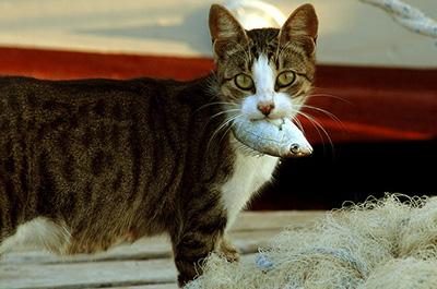 魚をくわえる野良猫