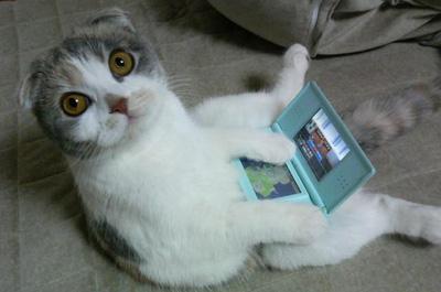 DSで遊ぶ猫