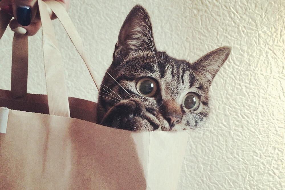 袋に入ってこちらを見つめる飼い猫のアン