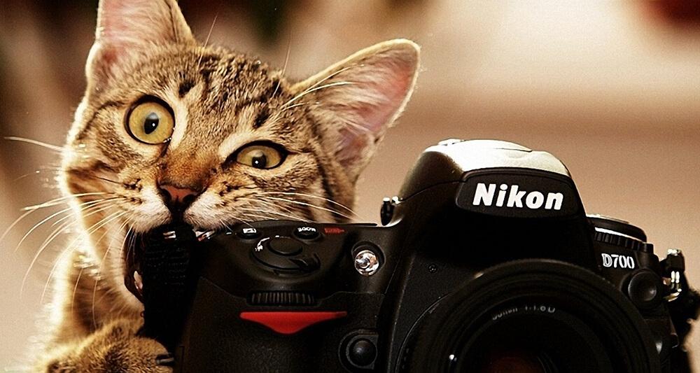 カメラを甘噛みする猫