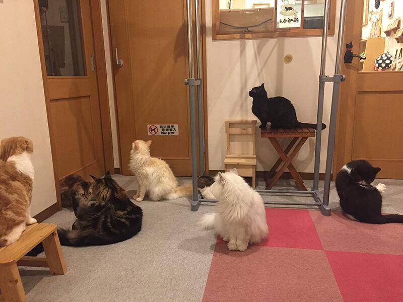 一か所に集まる猫たち