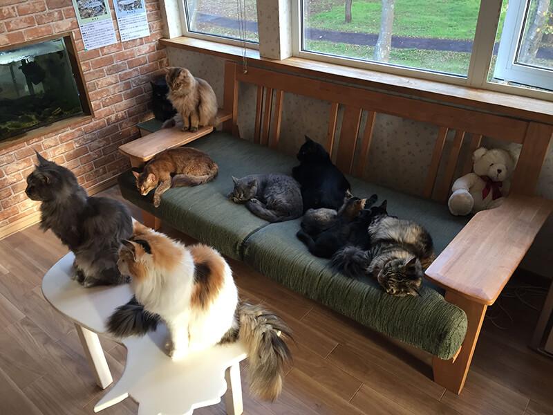 ソファーで寝る猫たち