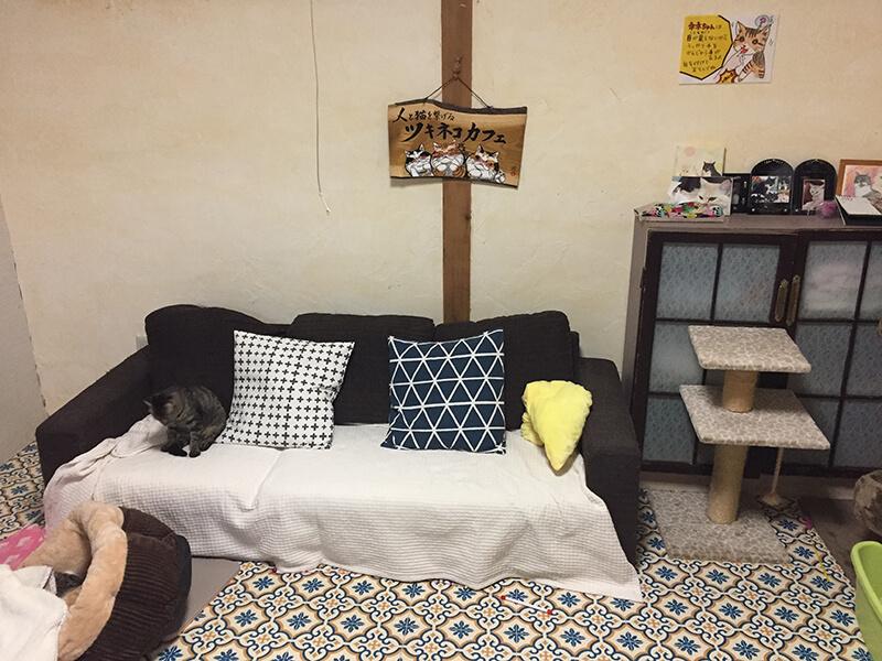 ツキネコカフェの子猫部屋