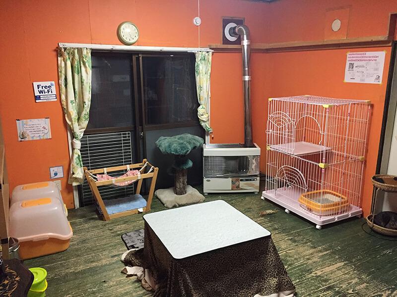 ツキネコカフェの子猫部屋2