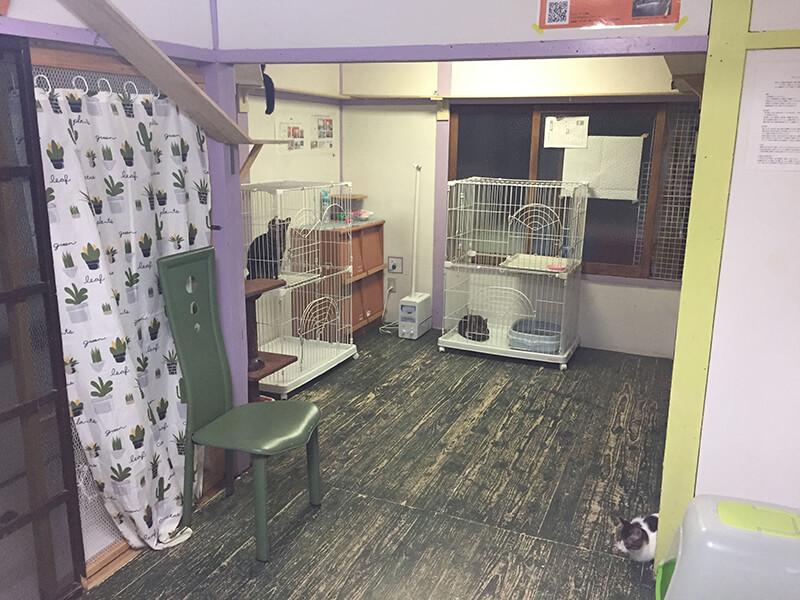 ツキネコカフェの成猫部屋