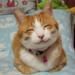 猫がゴロゴロと喉を鳴らす理由とその気になる効果は?
